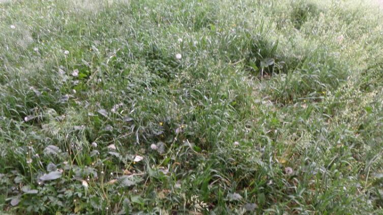 Трава до бритья выглядит немного лохмато. Непорядок.