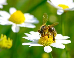 Почему кусаются осы и как избавиться от опасного соседства?