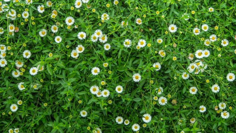 Как избавиться от скучных английских газонов?