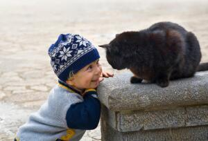 Как появились «кошачьи» приметы и суеверия?