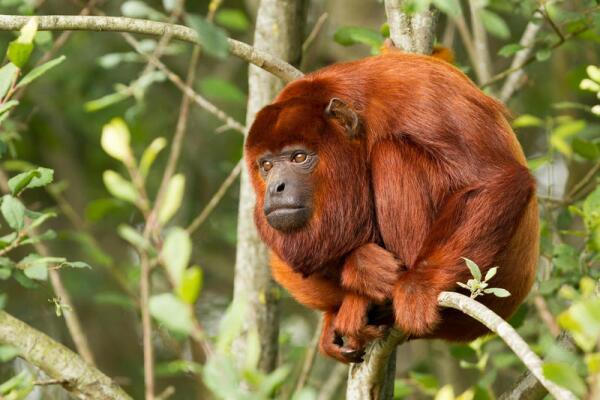 Предки человека. Вы уверены, что это обезьяны? Часть 1