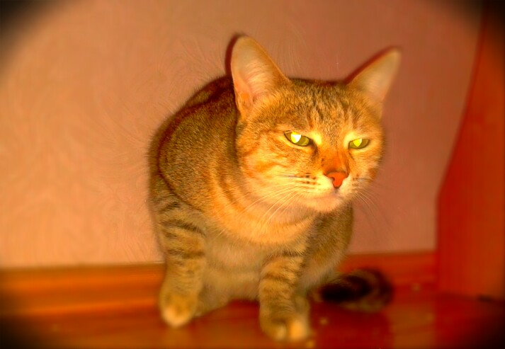 Как живется кошке среди людей? Монолог кошки-королевы