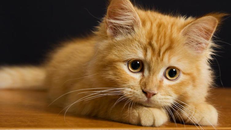А кому кота в мешке? «Кошачьи» фразеологизмы