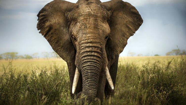 Для чего отмечается Всемирный день защиты слонов в зоопарках?