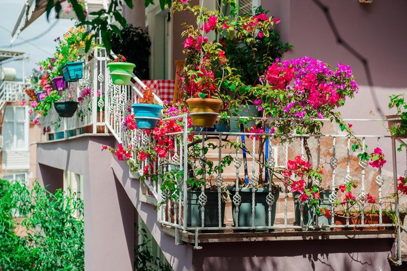 Цветы на балконе. Как создать зеленый уголок в каменных джунглях?