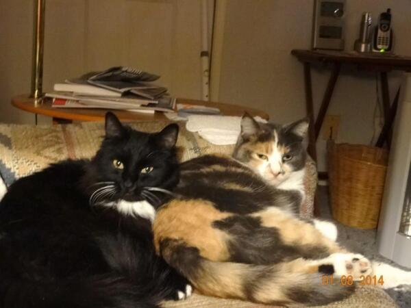 Черный кот Такс и его разноцветная подружка Соня