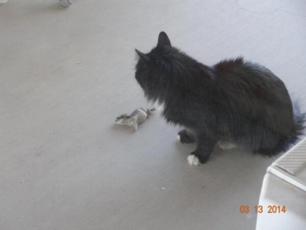 Первая пойманная мышь