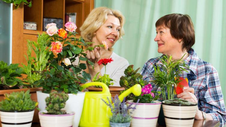 От чего страдают комнатные растения?