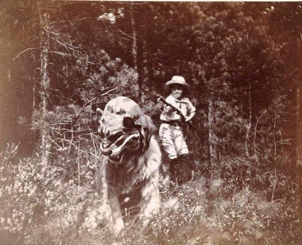 Сенбернар Портос в маске тигра.