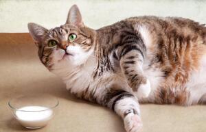О чем думают «мартовские» коты?
