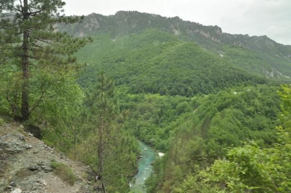 Говорят, Черногория потому, что на её вершинах растут такие интересные деревья...