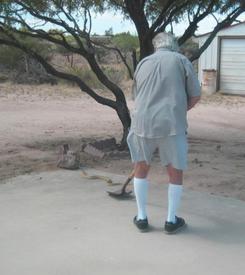 Мой муж подтолкнул заблудшую змейку к краю цементного пола, и она благополучно скрылась в ближайших кустах