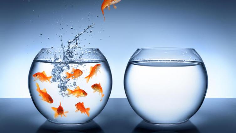 Какой выбрать аквариум и его интерьер?