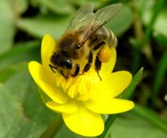 Каков на вкус, подскажешь, пчёлка, мёд?