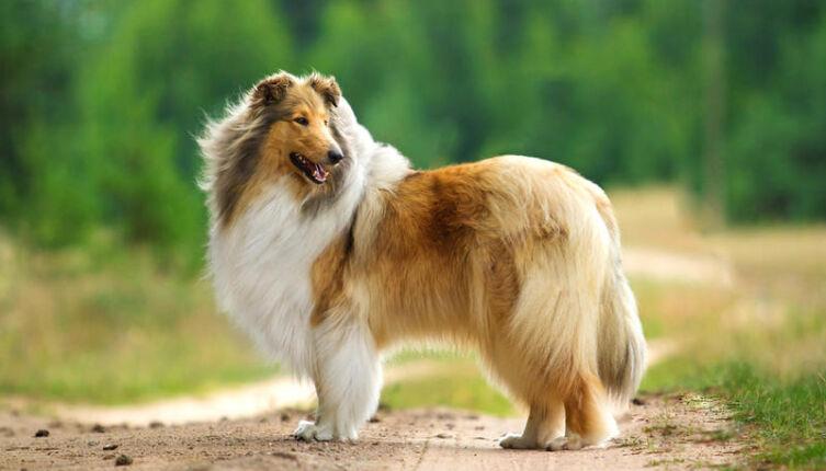 «Собака Баскервилей» существует?