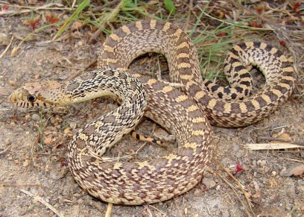 Змеи и коты: как кошка Соня пыталась подружиться со змеёй?