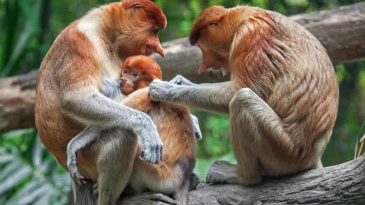 Теория «alfa-parenting»: семья— как животная стая, где родители— «альфы»