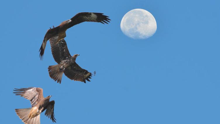 Летели над океан-морем бескрайним три сокола
