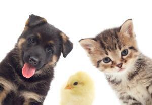 Что может навредить домашним животным?