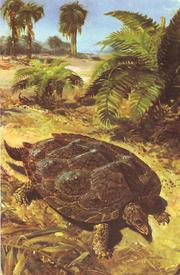 Одна из самых древних черепах - Proganochelys (триасовый период мезозойской эры).