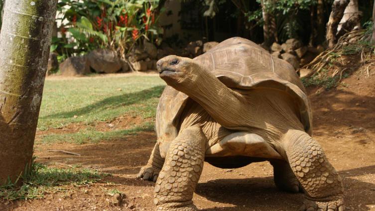 Как гигантские черепахи Землю держали, а маленькие в космос летали?