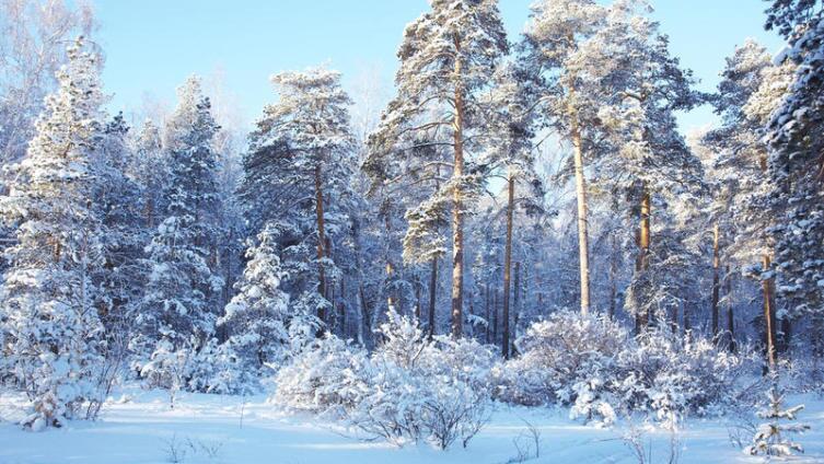 Какие грибы можно собирать в лесу зимой?