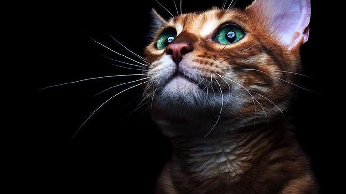 Может ли кот быть живым и мёртвым одновременно?