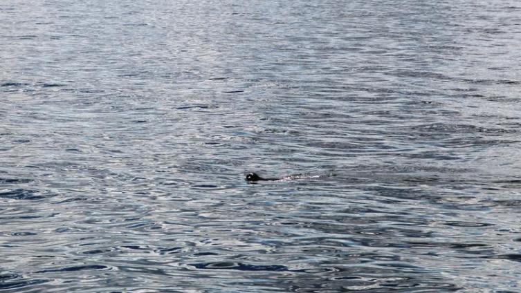 Это единственная нерпа, которую нам удалось увидеть на Байкале