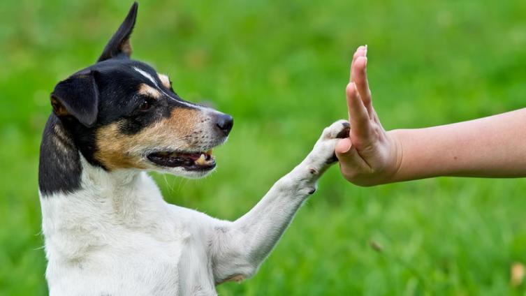 Как обучить собаку командам?