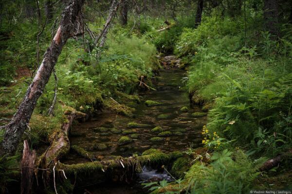 Таинственный лес в окрестностях Сейдозера. Здесь можно поверить во что угодно — и в мифы про древних саамских духов, и в сказки про Гиперборею