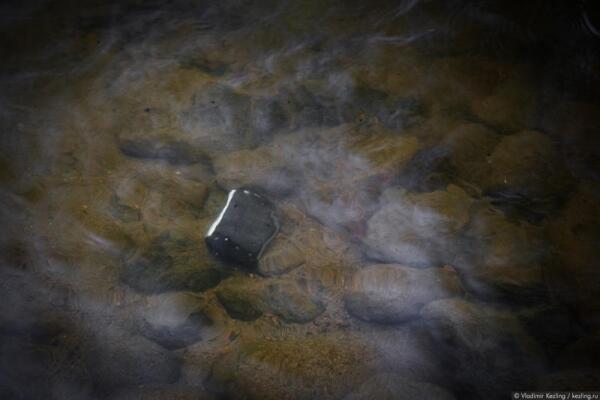Кидаешь его об камни, топишь в ледяной воде. А ему – хоть бы хны