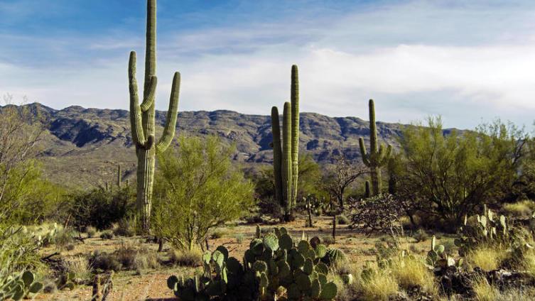 На какие рекорды живучести способны… растения?