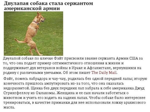 Скриншот заметки с портала Lenta.ru
