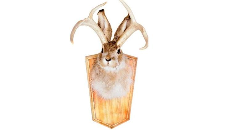 Где охотятся на рогатых зайцев?