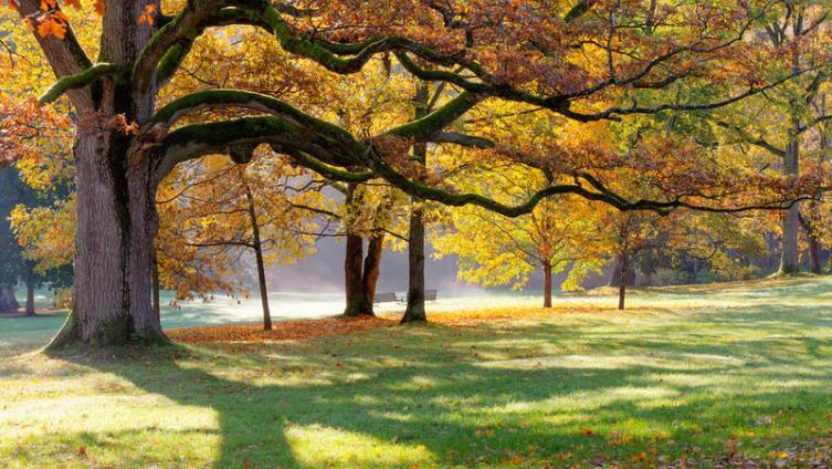 О чём могут рассказать деревья?