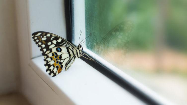 Бабочка, или Жизнь как жизнь?