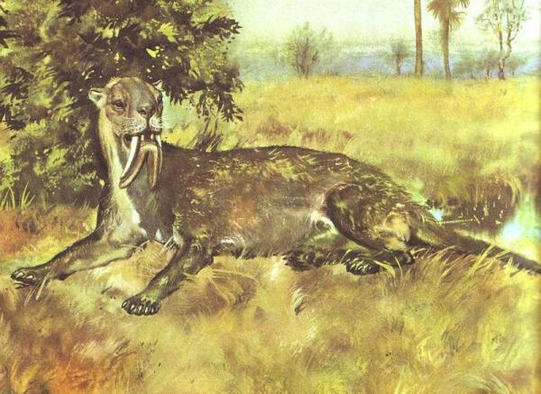 Сумчатый тигр