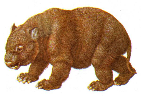 Дипротодон топтал землю Австралии 40 тысяч лет назад.