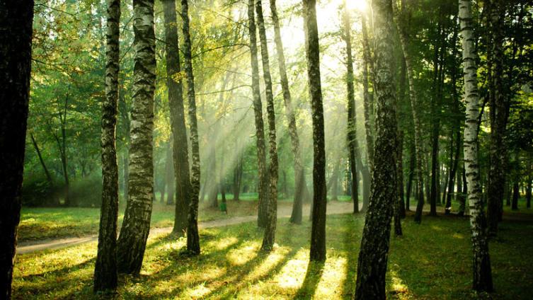 Остается ли Россия лесной державой?