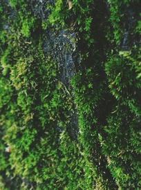 Уютный мягкий мох