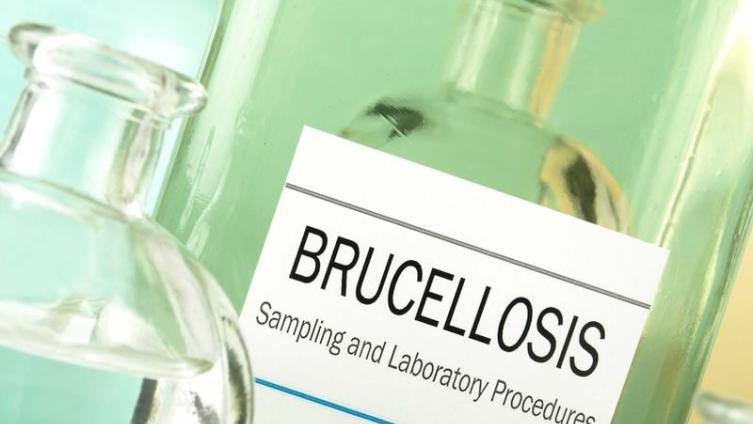 Бруцеллез. Как защитить людей от этой болезни?