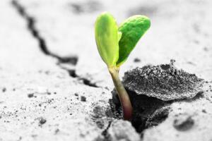 Почему защитники природы терпят поражение?