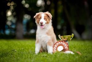 Хэндлер. Кому доверить собаку на выставочном ринге?