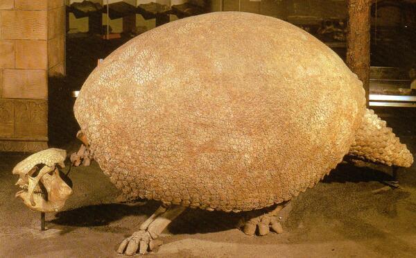Скелет гигантского броненосца глиптодонта
