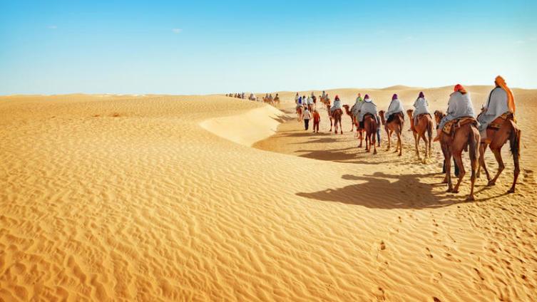 Была ли Сахара цветущей?