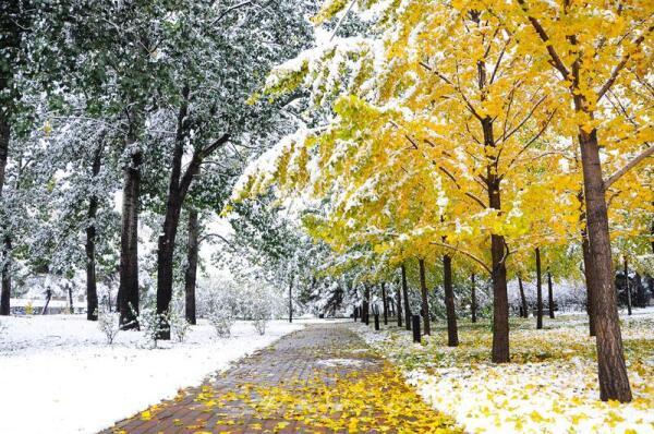 Между осенью и зимой: чем интересно это время?