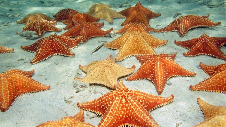 Звёздный вопрос: кто в море живет, а плавать не умеет?