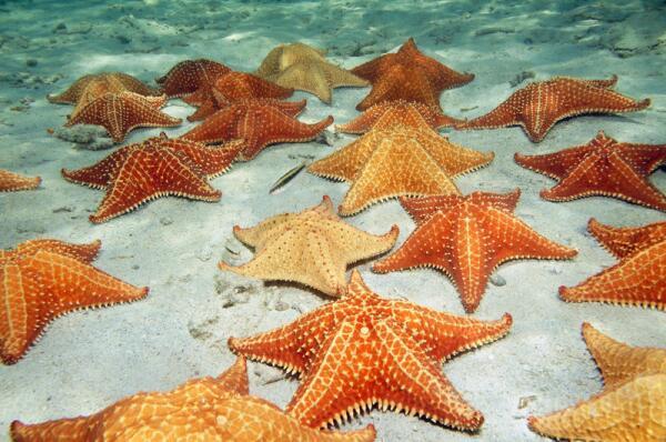 Звёздный вопрос: кто в море живёт, а плавать не умеет?