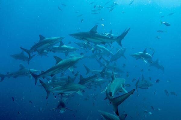 Оружейная компания Freedom Arms. Как «маленькая рыбка» оружейного бизнеса смогла выжить среди «акул»?
