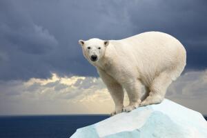 Какими способами покоряли Северный полюс?